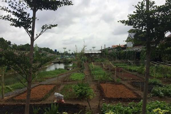 Vườn triệu đô trồng rau nuôi cá giữa phố nhà giàu Thảo Điền